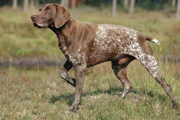 A kutya tanítása hatékonyan – kutyaiskolában