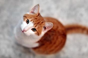 Őszi egészségmegőrzés cicusok számára